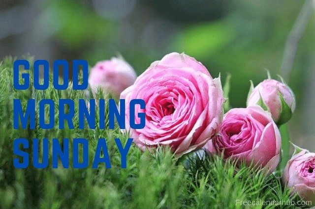 Good Morning Flower Images Cate