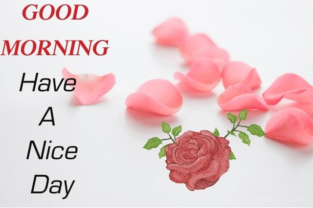 Good Morning Flowers Video Download
